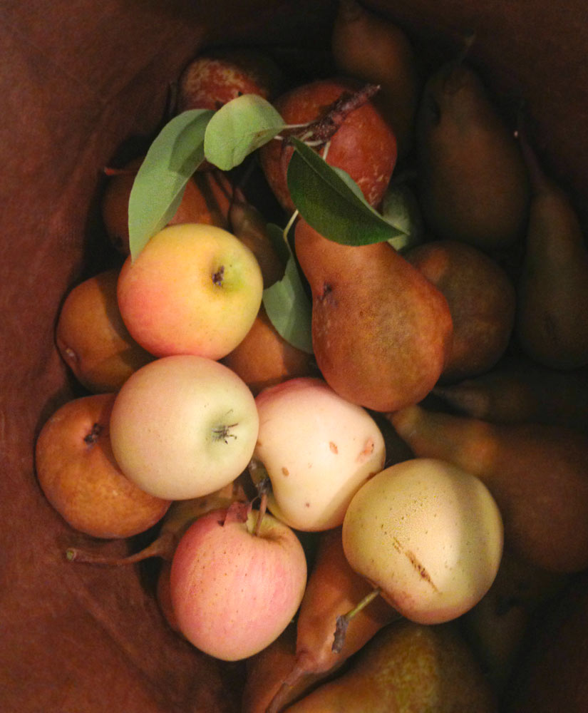 Poached Pears - Paleo Sonoma